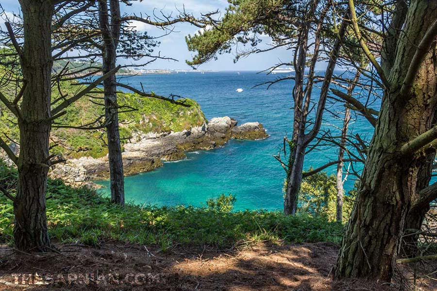 Marble Bay through the pines