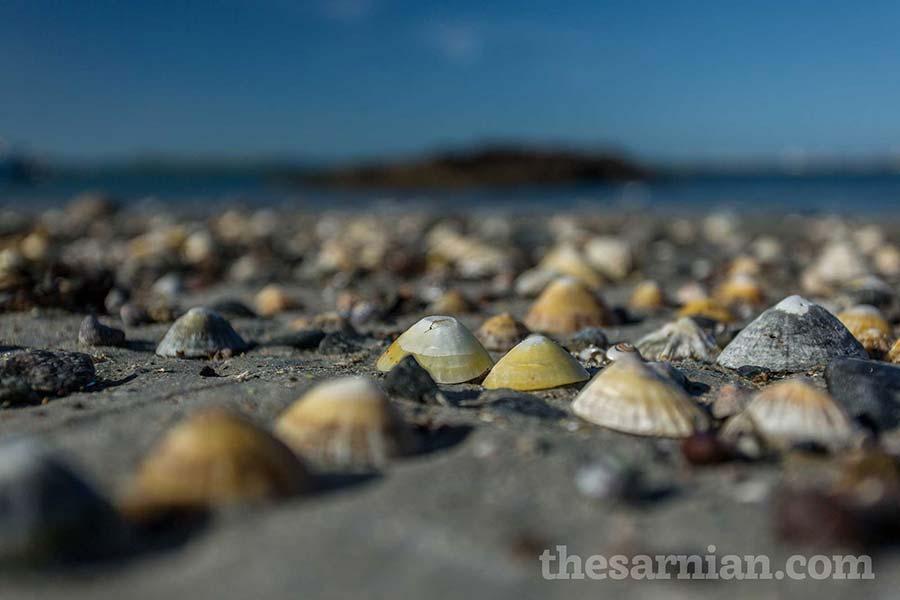 Shells on Portelet beach